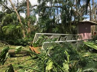 Trees down in North Miami
