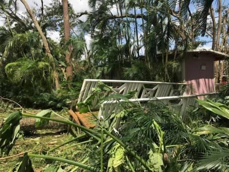Trees down in North Miami