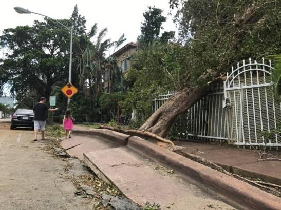 Toppled tree in Miami Beach raised the sidewalk.