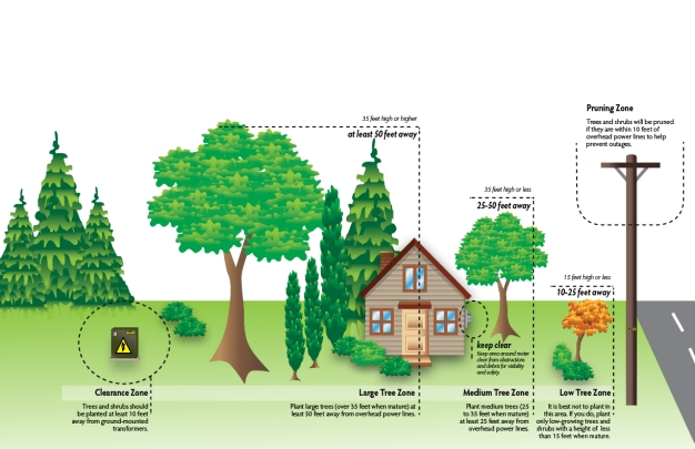 treeclearancegraphic